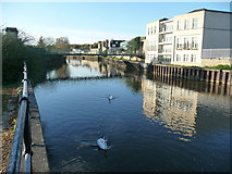 ST7464 : Bath : The River Avon by Lewis Clarke