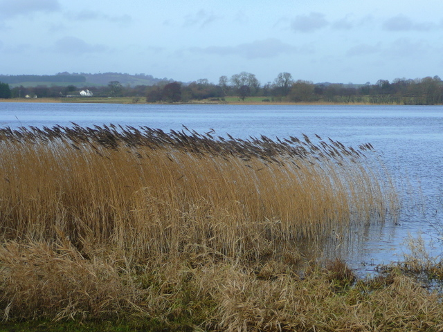 View north across Llangorse Lake