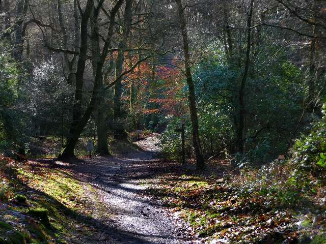Sussex Border Path, Durford Heath