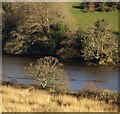 SX8258 : Trees by the River Dart : Week 3