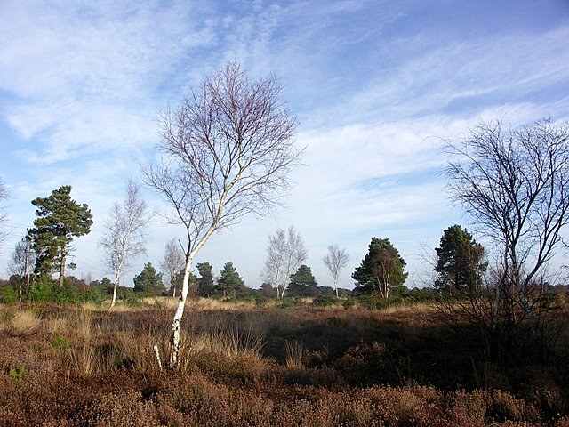 Open Heath on Ferndown Common
