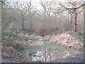 TQ4475 : Pond in Oxleas Wood by Stephen Craven