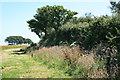 SX1857 : The Giant's Hedge, near Lanreath by Adrian Platt