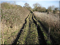 TL4983 : Fenland byway by Hugh Venables