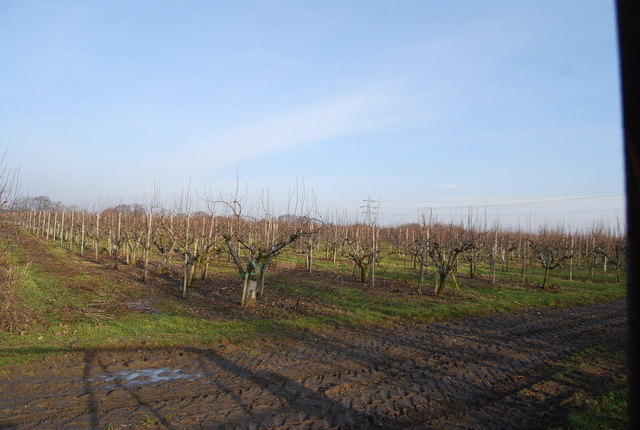 Apple Orchard Broad Oak N Chadwick Cc By Sa 2 0