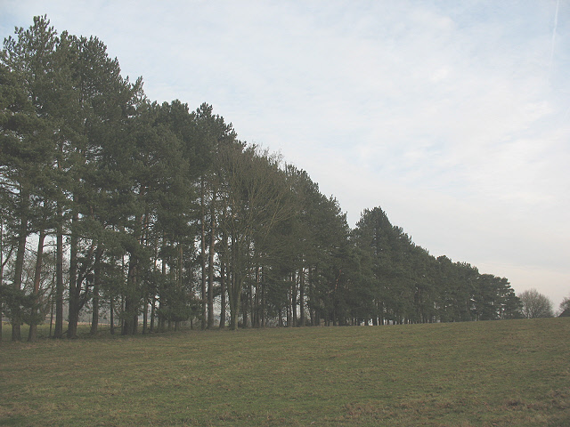 Windbreak near Charing