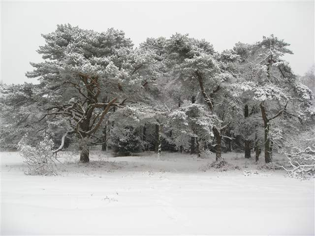 Hindhead Common in the snow