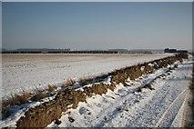 TF0258 : Blankney Heath by Richard Croft