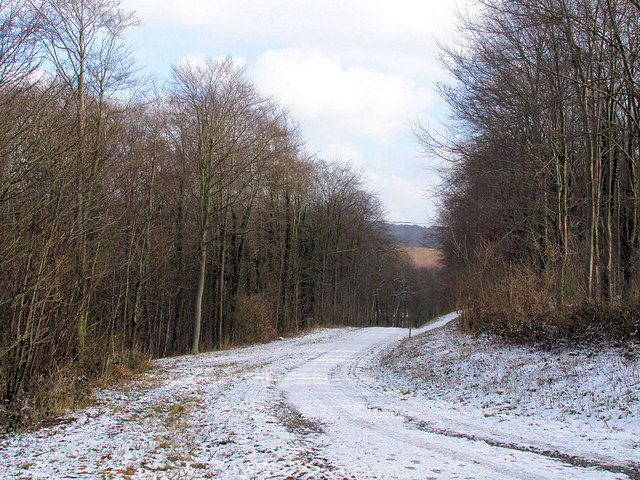 Track through Friston Forest