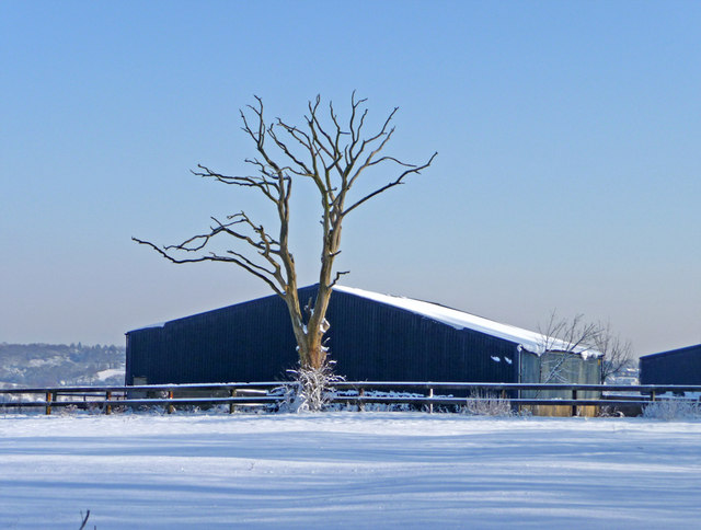 Dead tree and barn, South Lodge Farm, Enfield