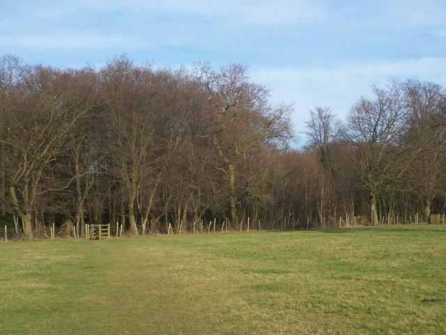Hartley Wood