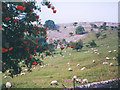 SD9477 : Summer grazing at Buckden by Stephen Craven