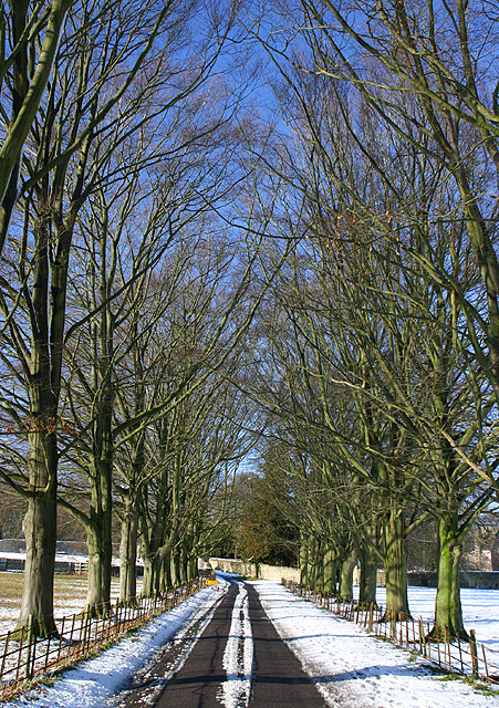 Avenue of trees at Asthall