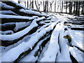 SJ9670 : Pile of snow covered logs, Macclesfield Forest by Colin Park