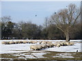 TL1291 : Feeding time next to the Billing Brook by Michael Trolove