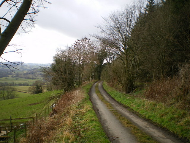 Public road below Bodynfoel Wood
