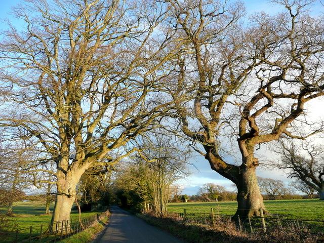 Oaks by Holme Lane