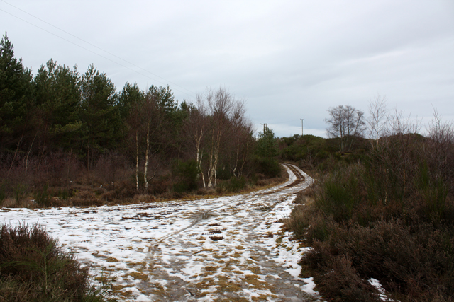 Track Junction, Culbin Forest
