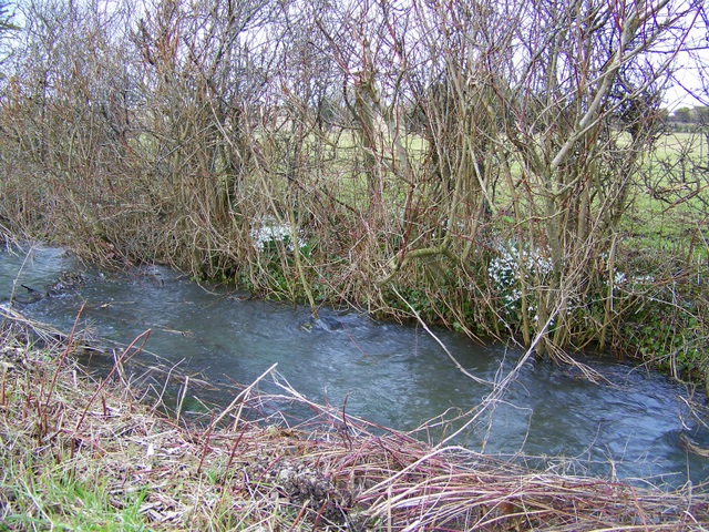 Stream, Gussage St Andrew