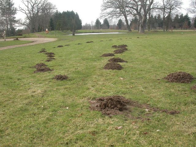 Woodland Burial Ground, molehills