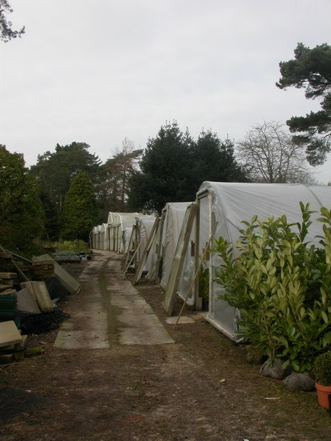 MacPennys Nursery, polytunnels