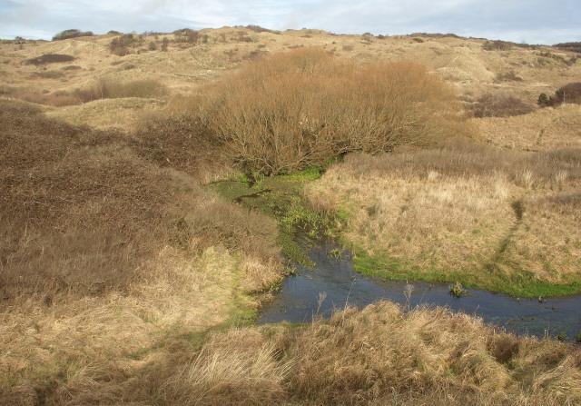 Duneland stream in the south of Merthyr Mawr Warren