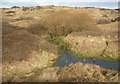 SS8577 : Duneland stream in the south of Merthyr Mawr Warren by eswales