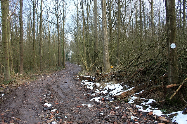 Track through Blackmore Wood
