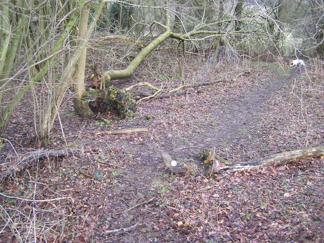 Daft place for footpath sign in Fowles Wood