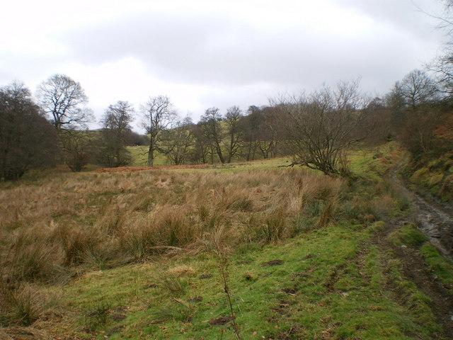 Marshland in the valley below Coed Glantanat