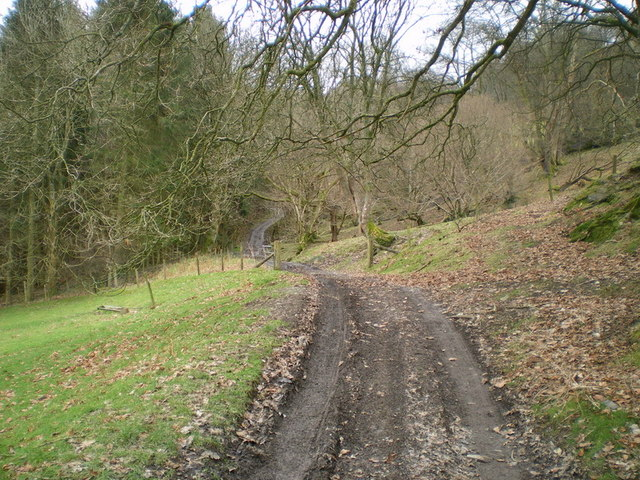 The track heading into the forest