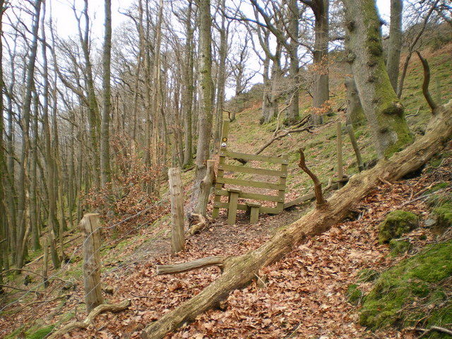 Stile in the woods