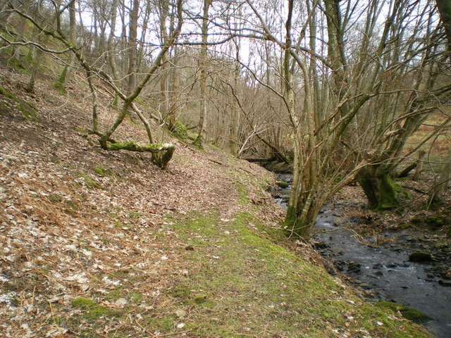 Footpath and stream in the woods