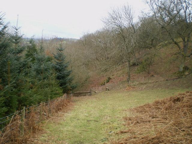 The woods below Allt Tair Ffynnon