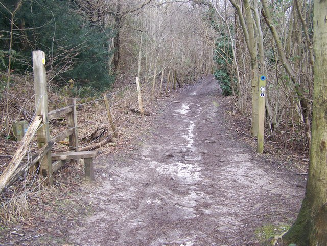 North Downs Way footpath junction on Pilgrim's Way
