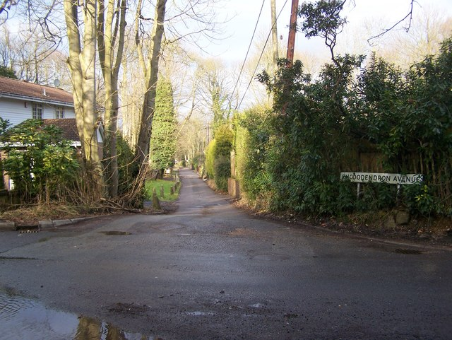 Rhododendron Avenue road junction with Redwood Drive