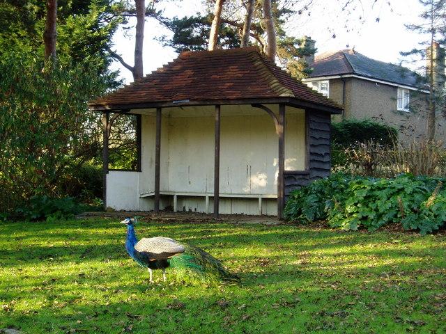 Shelter at Brent Lodge Park