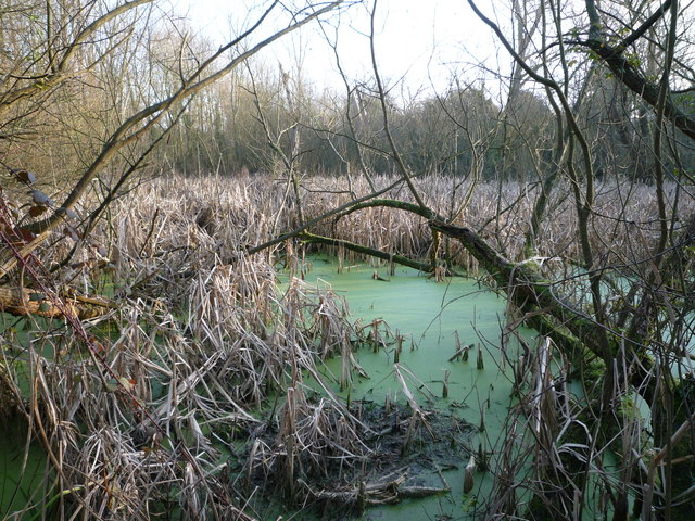 Pond located in the scrub land between the Uxbridge Road and the West Middlesex golf course