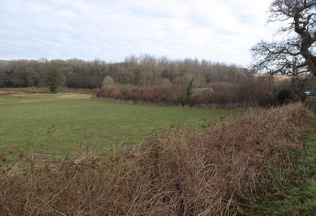 Hedge, field and Harbourne River valley