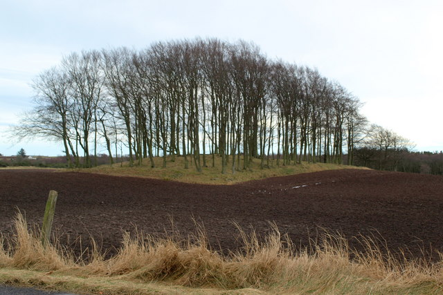 Small area of trees near Newton of Kirkbuddo