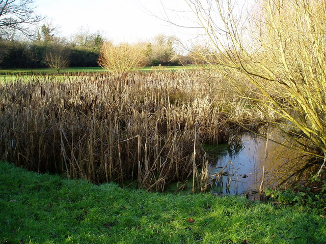 Pond in Boies Meadow