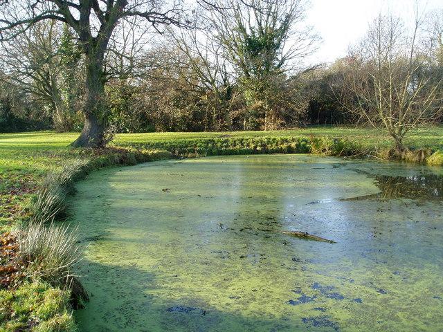 Pond in Boies Meadow