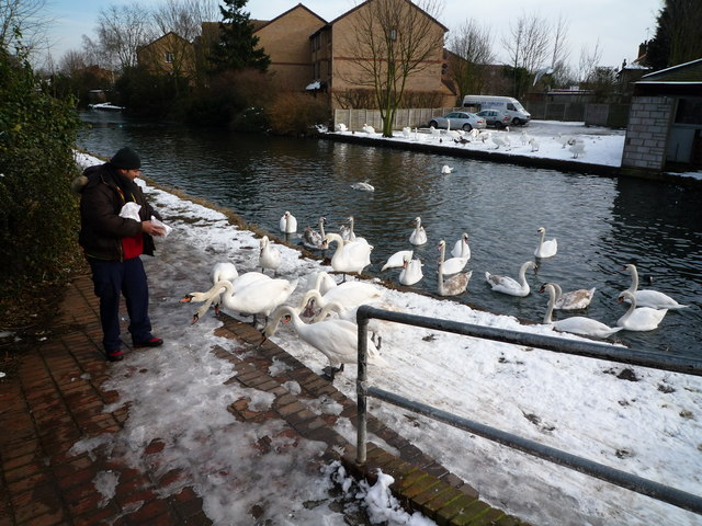 Feeding swans on the Grand Union Canal