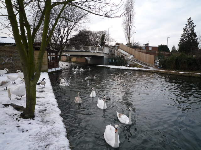 Swans and the Wolf Bridge