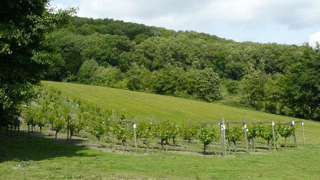 Vines at Godstone Vineyard