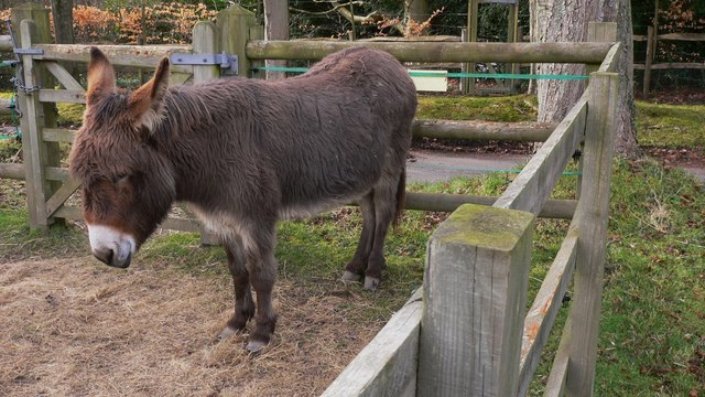Donkey in paddock on Marley Heights