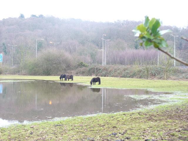 The Bourne, Flood Plain