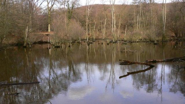 Pond near Shulbrede Priory
