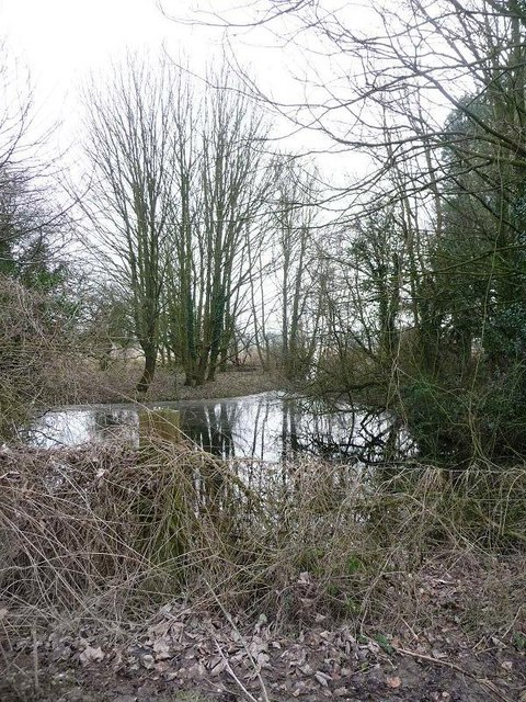 Long Crichel: Veiny Cheese Pond