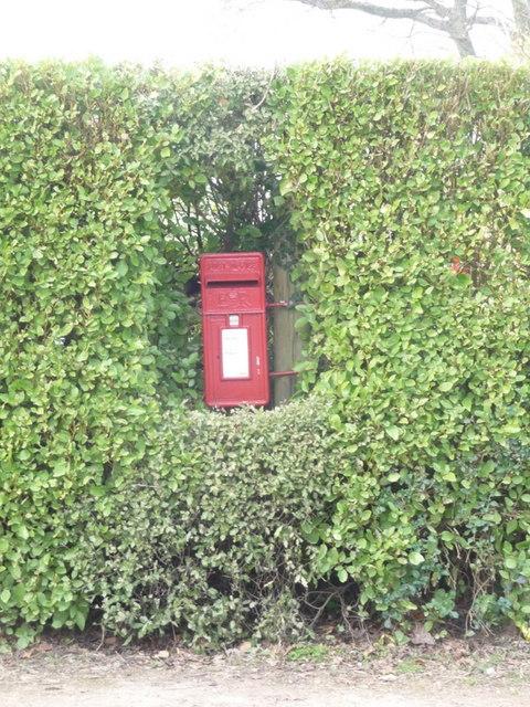 Gaunt's Common: postbox № BH21 169